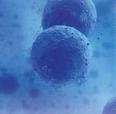 BCN Peptides