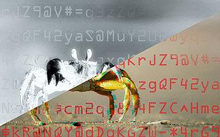 GandCrab-Analyse: 99-mal weggeklickt und trotzdem Malware installiert